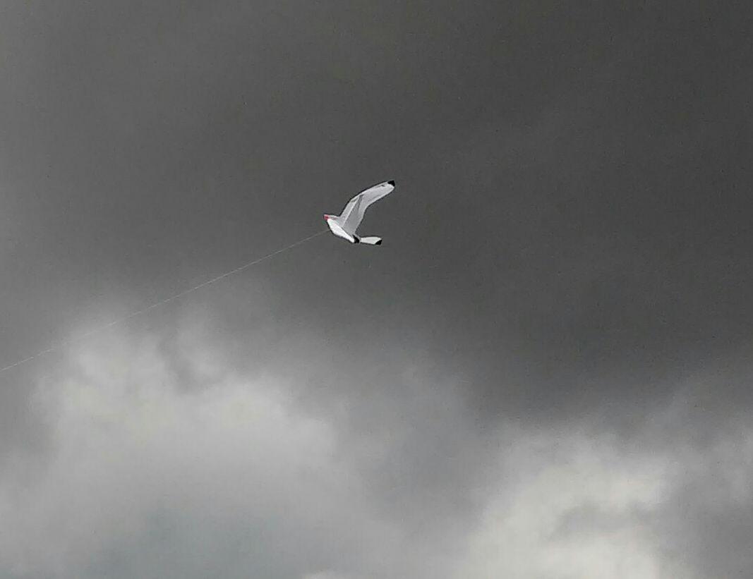 kite-festival-1